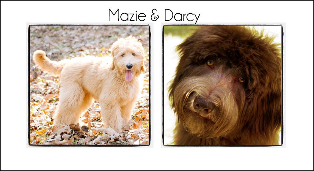 Mazie & Darcy's Pups