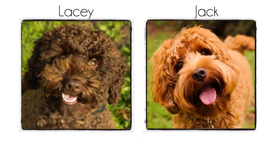 Lacey & Jack's Puppies