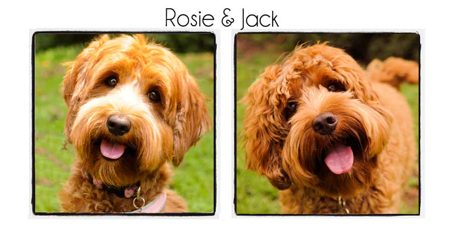 Rosie & Jack's Puppies
