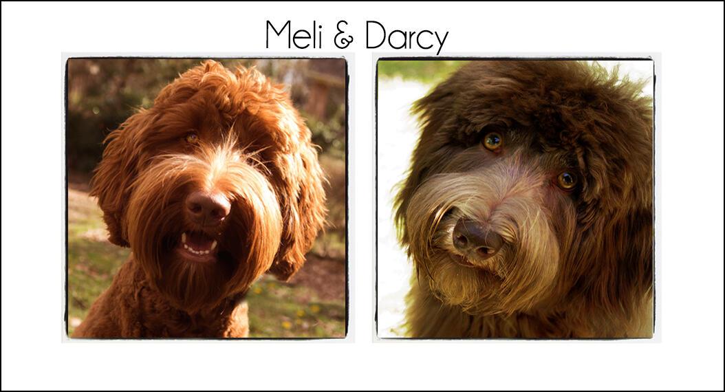 Meli & Darcy's Puppies