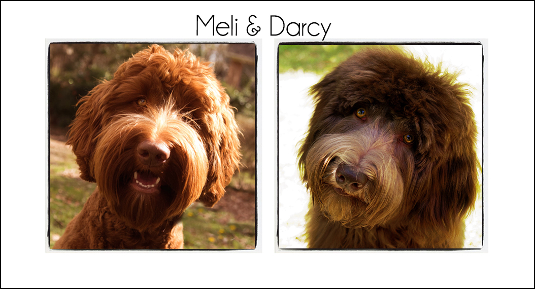 Meli & Darcy's Puppies
