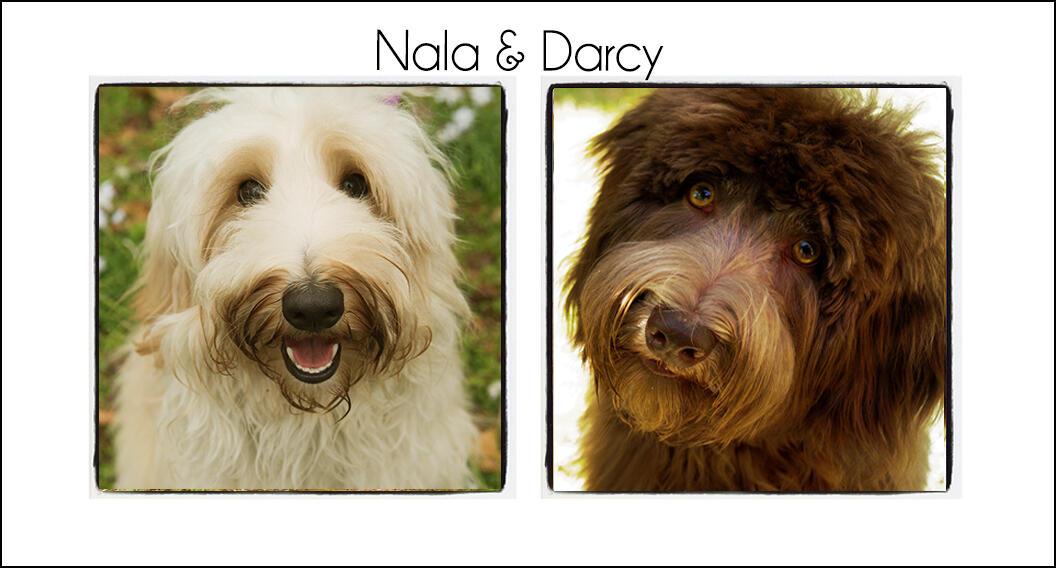 Nala & Darcy's Puppies