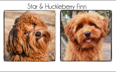 Star & Finn {2021}