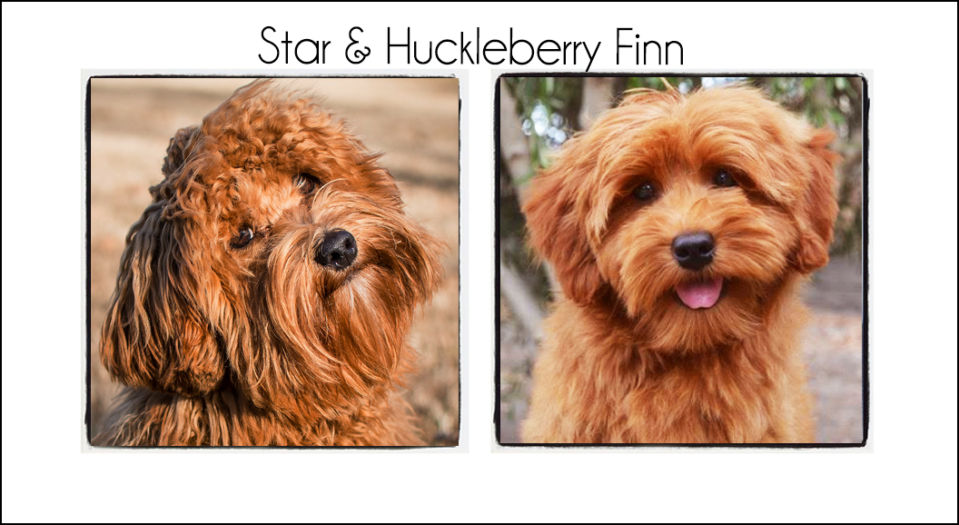 Star & Huckleberry Finn