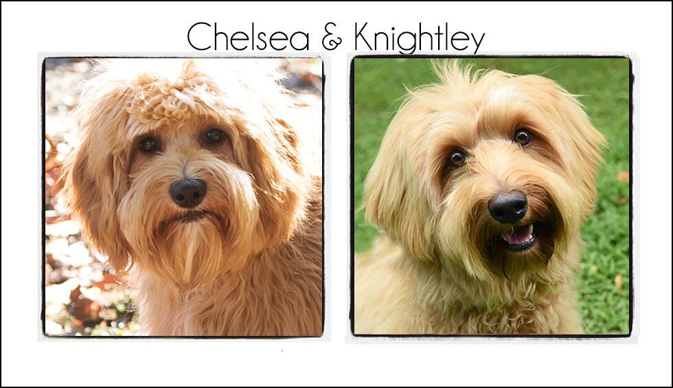 Chelsea & Knightley {2021}