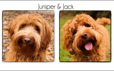 Juniper & Jack