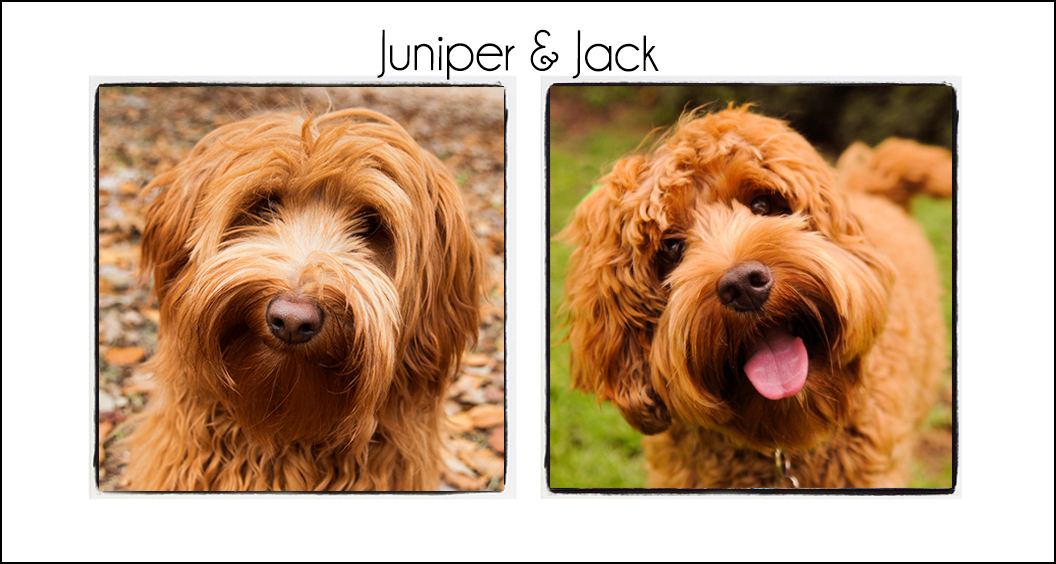 Juniper & Jack's Puppies