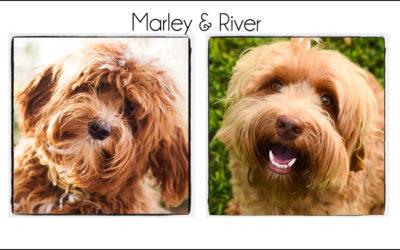 Marley & River {2021}