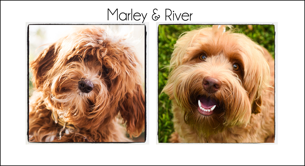Marley & River's Puppy