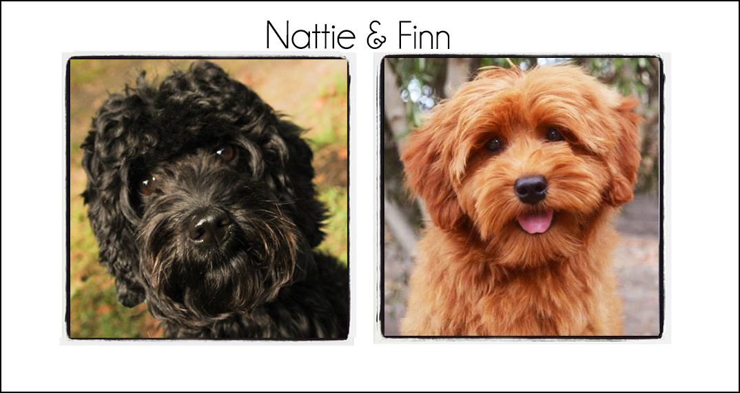 Nattie and Finn's Puppies {Winter 2021}
