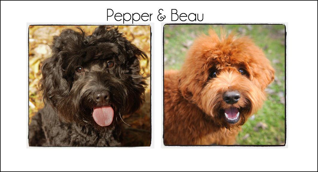 Pepper & Beau {2021a}