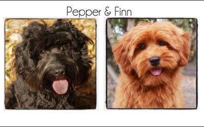 Pepper & Finn {2021b}