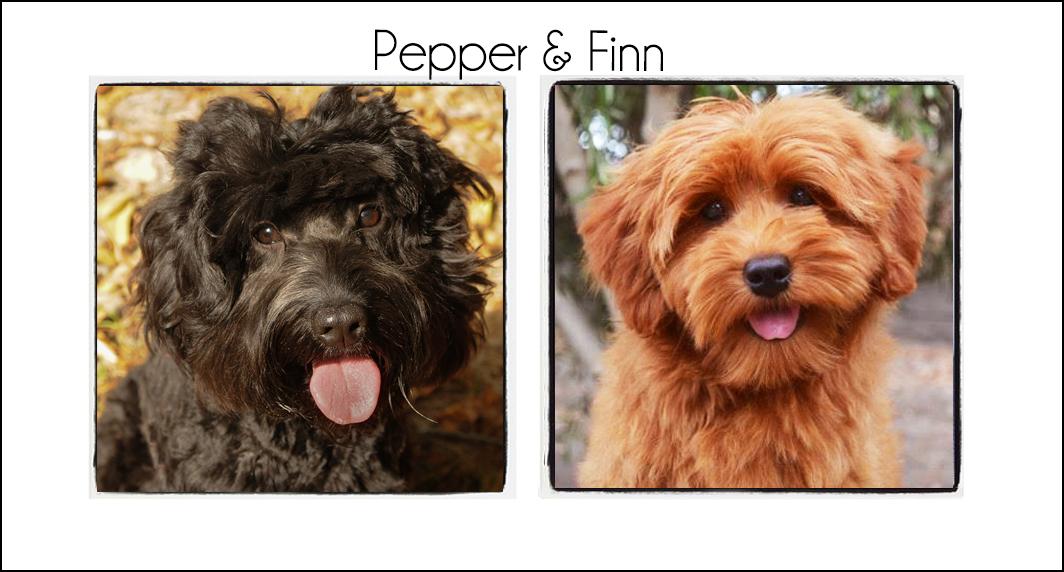 Pepper & Finn