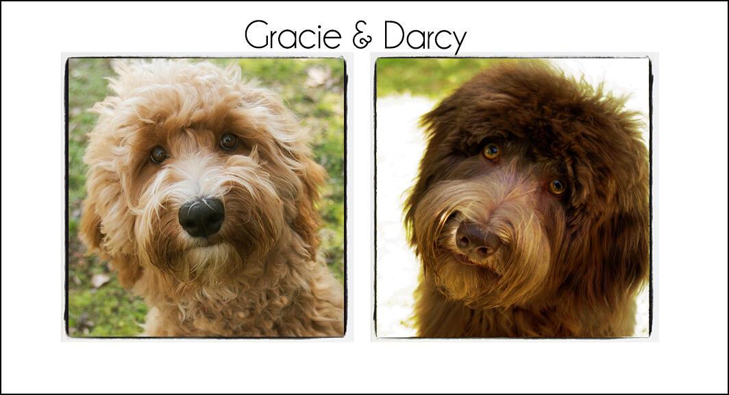 Gracie & Darcy {2021}