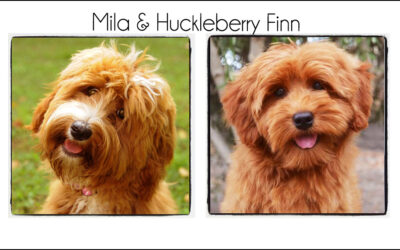 Mila & Finn's Puppies {Winter 2021}