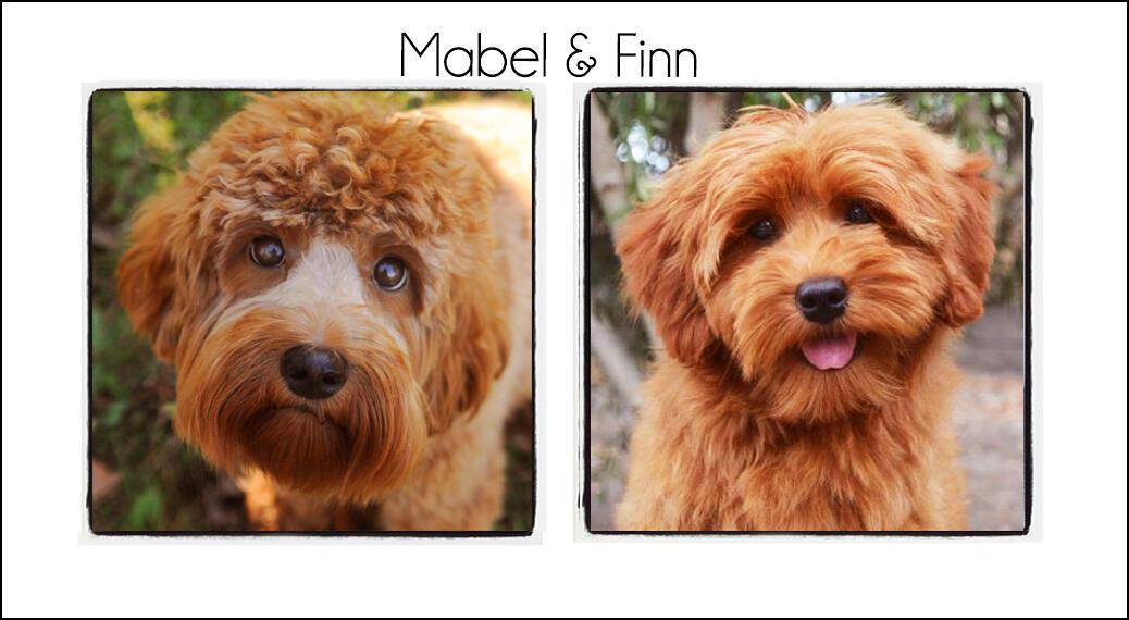 Mabel & Finn's Puppies