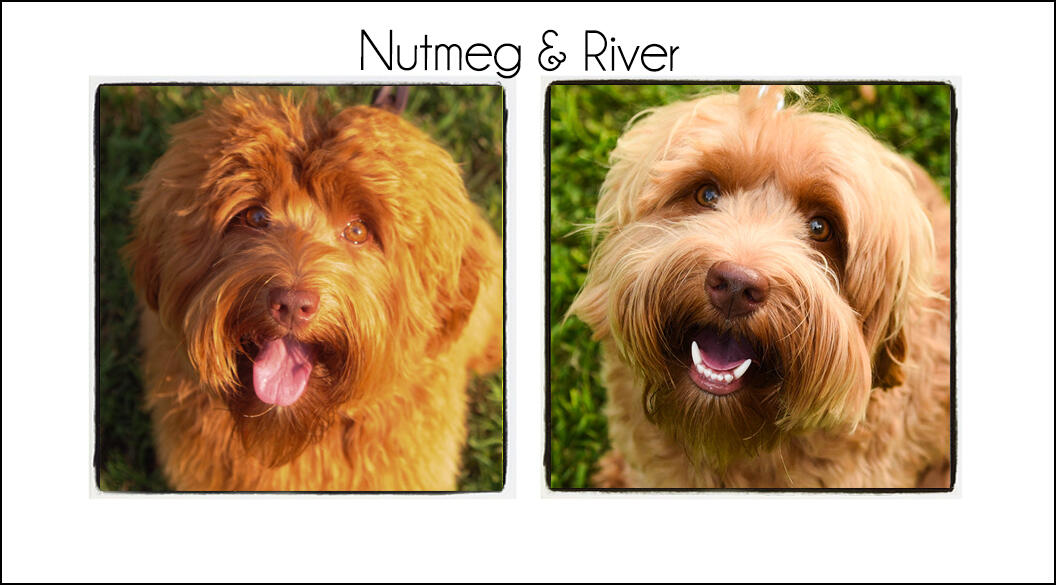 Nutmeg & River {2021b}