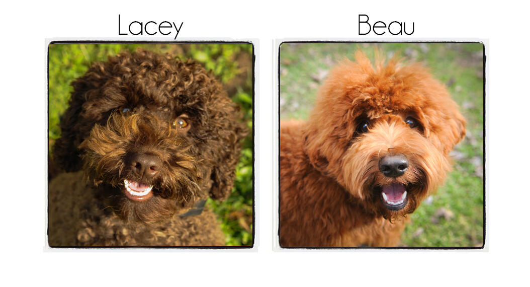 Lacey & Beau's Puppies