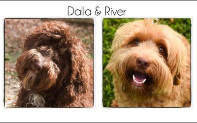 Dalla & River's Puppies {Spring 2021}
